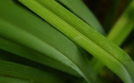 Green nature grass macro wallpaper