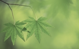 Green nature leaf leaves plants water drops wallpaper