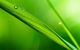 Green nature leaves plants water drops macro depth of field wallpaper