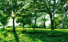 Green nature sun trees grass wallpaper