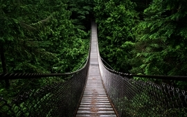 Green nature trees forest bridges wallpaper