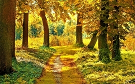 Green nature trees forest wallpaper