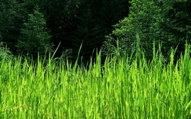 Green nature trees grass wallpaper