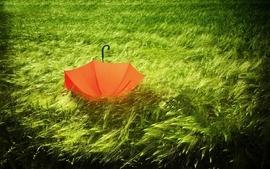 Green orange grass umbrellas wallpaper