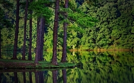 Green trees forest lakes reflections wallpaper