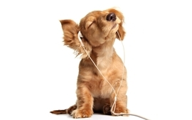 Headphones animals dogs puppies simple background white wallpaper
