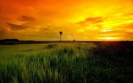Horizon orange distance grass evening savanna wallpaper