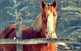 Horses 4 wallpaper