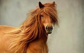 Horses 6 wallpaper