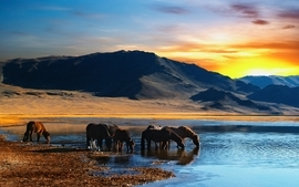 Horses lakes wallpaper