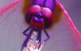 Insects bug fly macro wallpaper