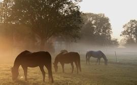 Landscapes animals fields horses wallpaper