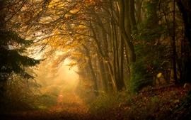 Landscapes forest path wallpaper