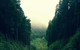 Landscapes forest wallpaper