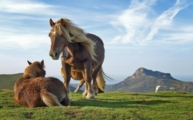 Landscapes nature animals horses hdr photography wallpaper
