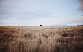 Landscapes nature animals wildlife outdoors bison wallpaper