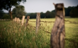 Landscapes nature fences depth of field wallpaper
