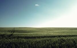 Landscapes nature fields wallpaper