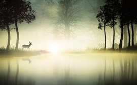 Landscapes nature mist deer reflections wallpaper