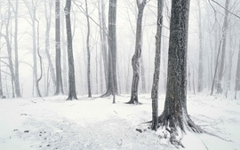 Landscapes nature snow trees forest 2 wallpaper