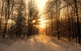 Landscapes nature snow trees sunlight wallpaper