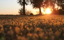 Landscapes nature sun trees grass sunlight macro wallpaper