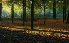 Landscapes nature trees autumn forest photography parks wallpaper