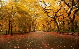 Landscapes nature trees autumn parks wallpaper