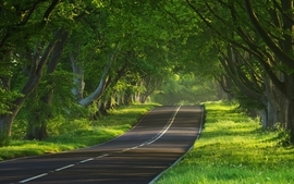 Landscapes nature trees forest day roads wallpaper