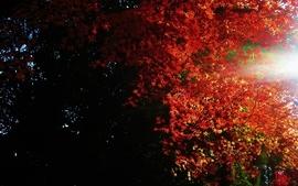 Landscapes nature trees forest sunlight autumn wallpaper