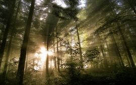 Landscapes nature trees forest sunlight hdr photography wallpaper