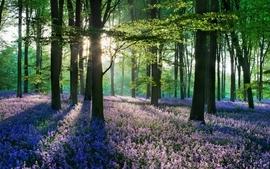 Landscapes nature trees forest wallpaper