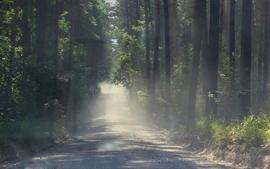 Landscapes nature trees plants roads wallpaper