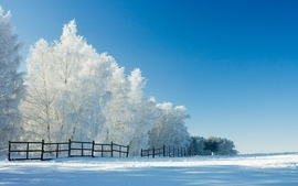 Landscapes nature winter season trees hdr photography 2 wallpaper