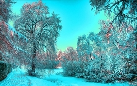 Landscapes nature winter season trees hdr photography wallpaper