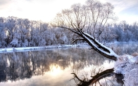 Landscapes nature winter snow trees forest rivers wallpaper