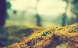 Landscapes photography grass fields macro wallpaper