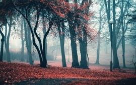 Landscapes trees autumn leaves fog lanterns park wallpaper