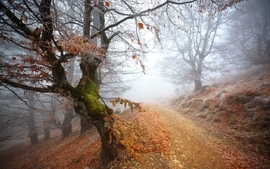 Landscapes trees autumn path mist wallpaper
