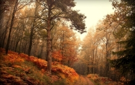 Landscapes trees autumn season wallpaper