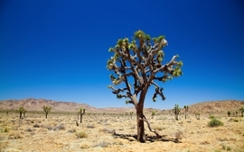 Landscapes trees desert wallpaper