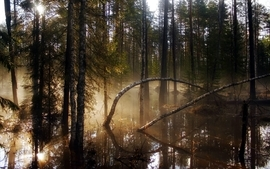 Landscapes trees forest lakes wallpaper