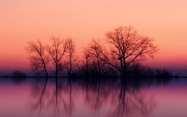Landscapes trees lakes wallpaper