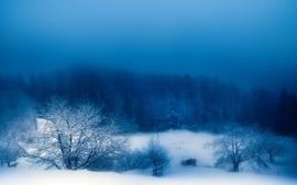 Landscapes winter season snow trees fog blue skies wallpaper