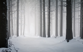 Landscapes winter season snow trees forest hdr photography wallpaper