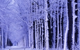 Landscapes winter snow trees tv shows wallpaper