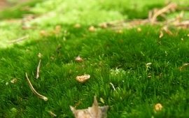 Leaves grass autumn wallpaper