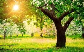 Light landscapes nature sun dandelions bright spring apple wallpaper