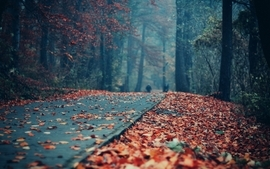 Light landscapes trees forest leaves roads depth of field wallpaper