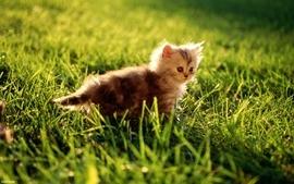 Light sun animals grass kittens wallpaper